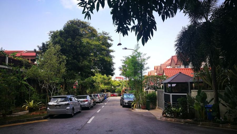 Tree Car Land