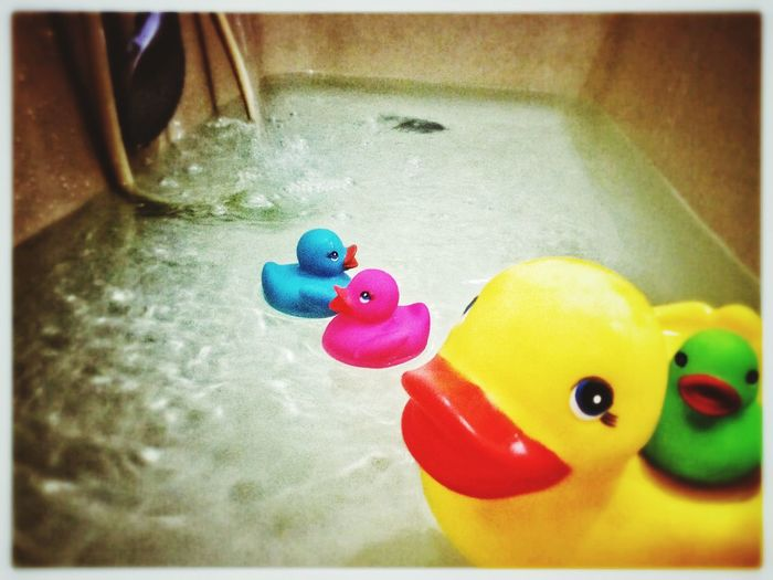 Mama duck Bath Time Bathroom IPhoneography Fun Water Colors