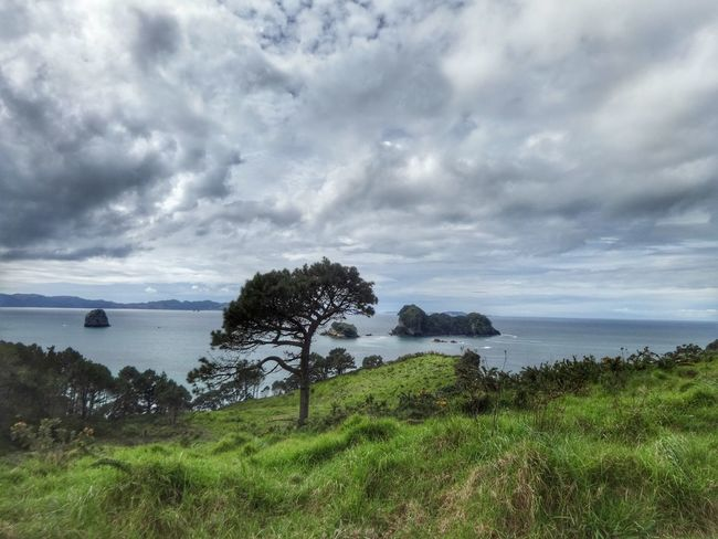 Hahei view Sea Water Tranquil Scene Grass Tree Horizon Over Water Tranquility Scenics Beauty In Nature Sky Growth Nature Green Color Non-urban Scene Cloud - Sky Shore Day Seascape Coastline Ocean New Zealand The Secret Spaces Lost In The Landscape The Great Outdoors - 2018 EyeEm Awards Summer Road Tripping