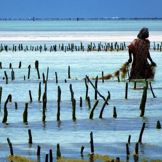 The seeweed center is a social business employing and training woman to make beauty products from the cultivating of picture was taken as we visited the shore were they cultivate the plants. Working Beach Horizon Over Water Lifestyles Real People Sea Water Women Wood - Material