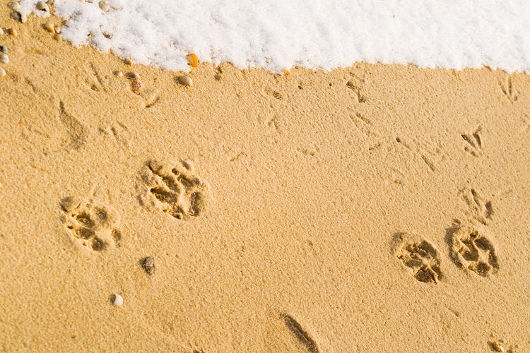 Directly above shot of dog footprint on beach during winter