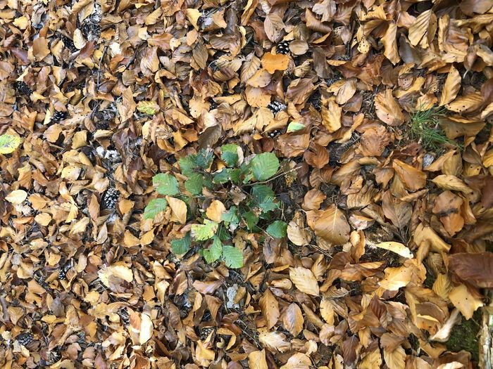 Full Frame Leaf Plant Part No People Dry Nature Backgrounds Abundance Day Change Leaves Beauty In Nature Large Group Of Objects Autumn Close-up Land Brown Outdoors Falling Field Natural Condition Dried