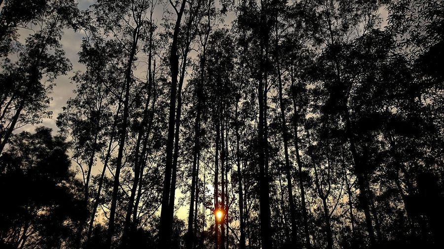 Nature Beauty In Nature Outdoors Dusk 黃昏 Duskfall 逢魔が時 Nightfall Forest