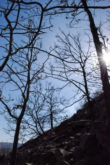 Gettin' closer... Hiking EyeEm Best EyeEm Best Shots - Trees TreePorn