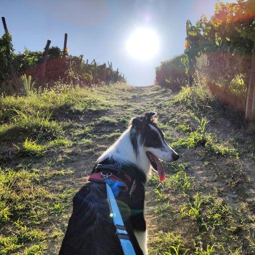 Pets Dog Sky