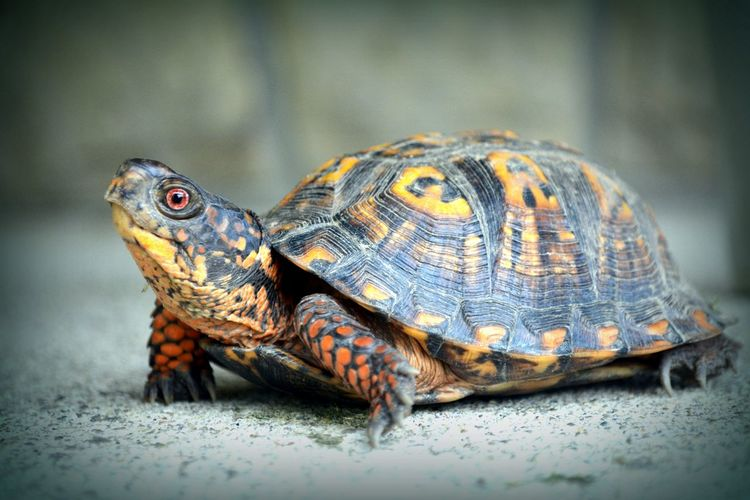 Close-Up Of Tortoise On White Surface