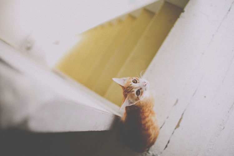 Animal Cat