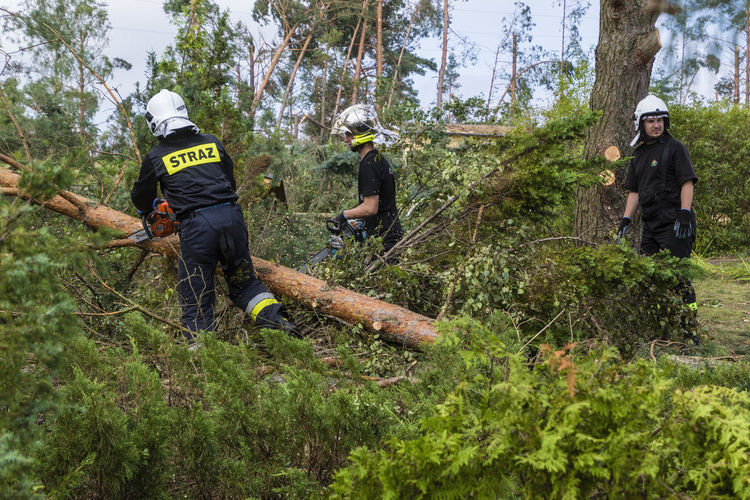 Firefighters during a rescue operation in Chojnice (Pomerania) - removing trees after a hurricane Cyclone Teamwork Damaged Day Disaster Disaster Area Firefighters Forest Headwear Helmet Hurricane Nature Outdoors People Rescue Rescue Action Tornado Damage Tree