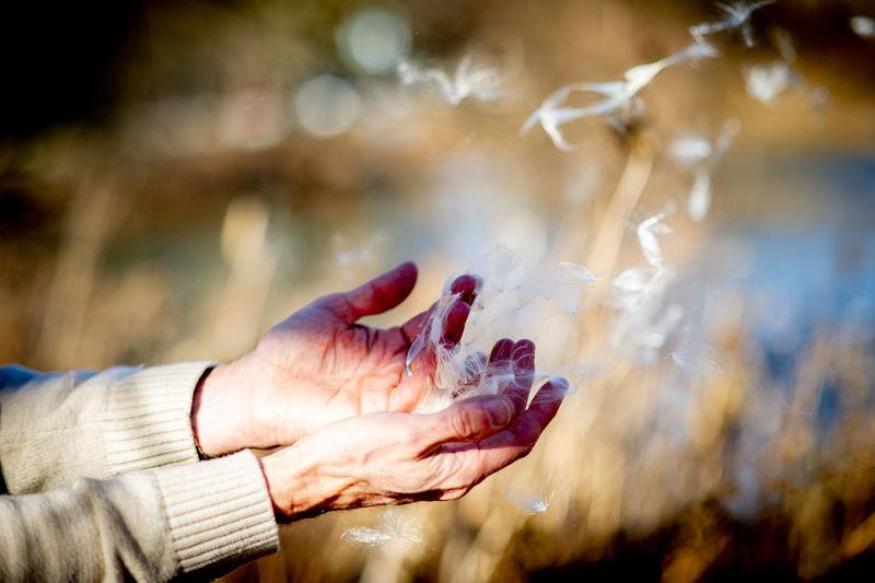 Close-up of hands holding dandelion seeds