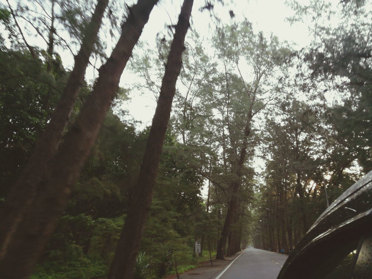 tree, car, transportation, road, nature, day, no people, forest, growth, outdoors, branch, scenics, beauty in nature, sky