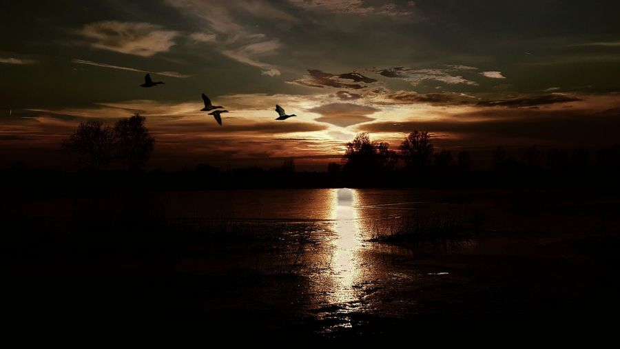 Silhouette of birds flying over lake during sunset