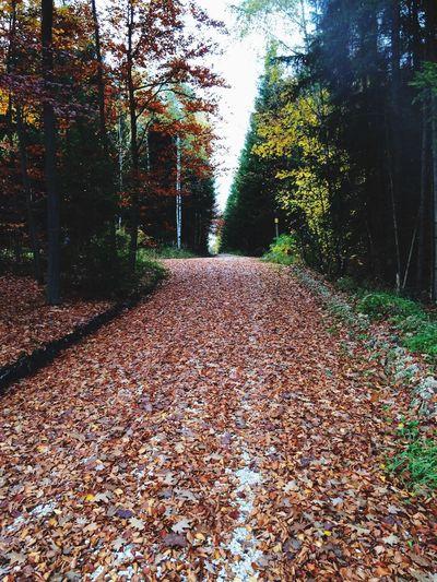 Autumn Autumn2016 Nature