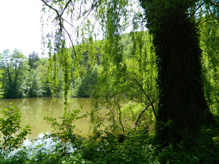 Sunlight Swamp