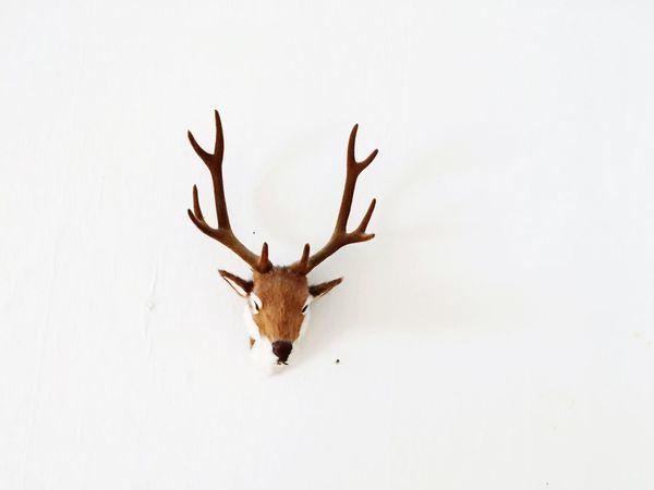 Deer Geweih Wandschmuck