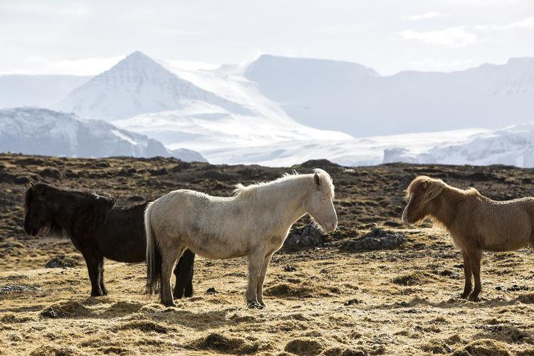 Horses on field against mountain range