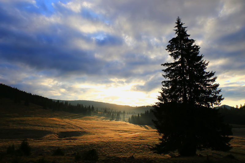 Perspectives On Nature Beauty In Nature Broad Perspective Cloud - Sky Dawn Lights Landscape Nature No People Outdoors Pine Tree Scenics Sky Sunrise Tranquil Scene Tranquility Transylvania💕 Warm Light Wide Angle