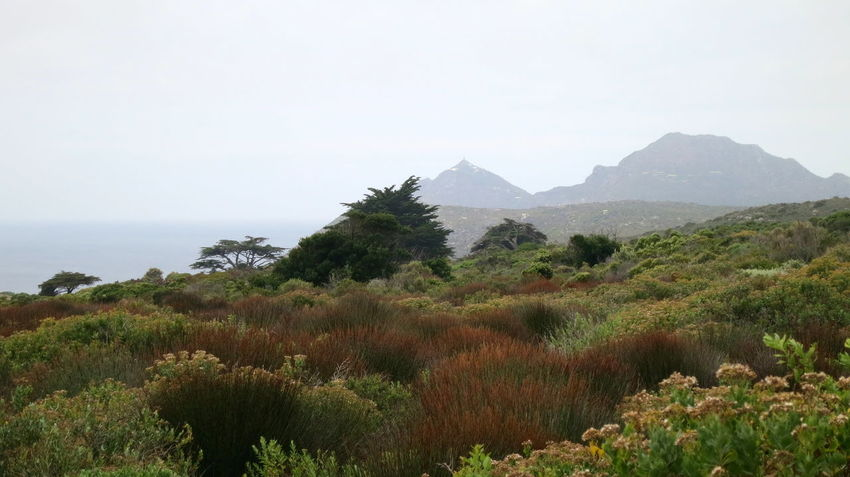 Beauty In Nature Costal Trail Day Landscape Nature No People Outdoors Scenics Sea Tranquility Vegetation