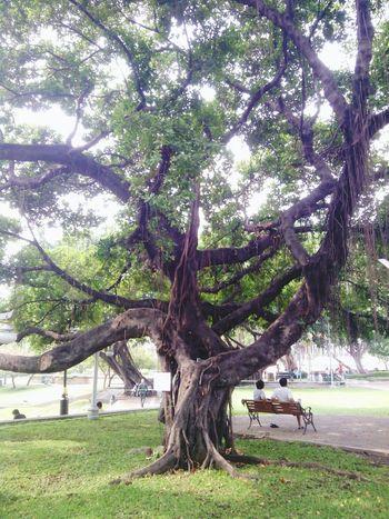Tree Hello World