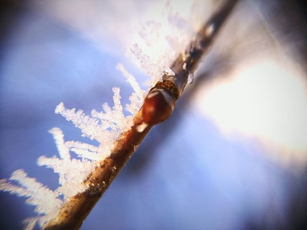 Day Close-up No People Indoors  Ice Beauty In Nature Frozen Weather Cold Temperature Ice Crystal Liight Up Your Life Outdoors Nature Winter Snow Christmas Tree Tree Topper