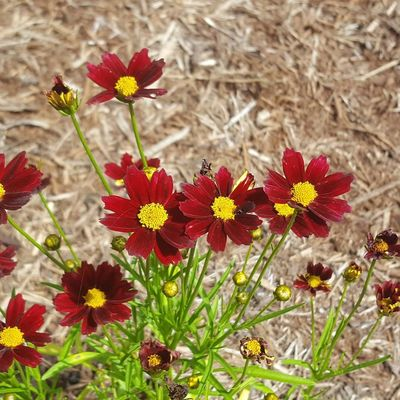 Flowers flowers everywhere Flower Fragility Flower Head Nature Petal Plant Freshness Beauty In Nature Pollen No People Day Growth Outdoors Red Springtime Close-up Zinnia  Summer Blossom Love Where You Live Day Tripping North Carolina