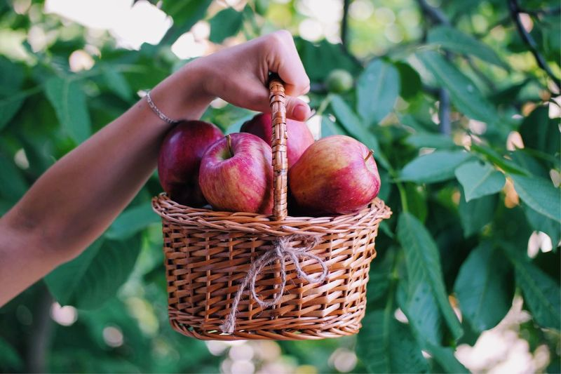 Close-up of apple in basket