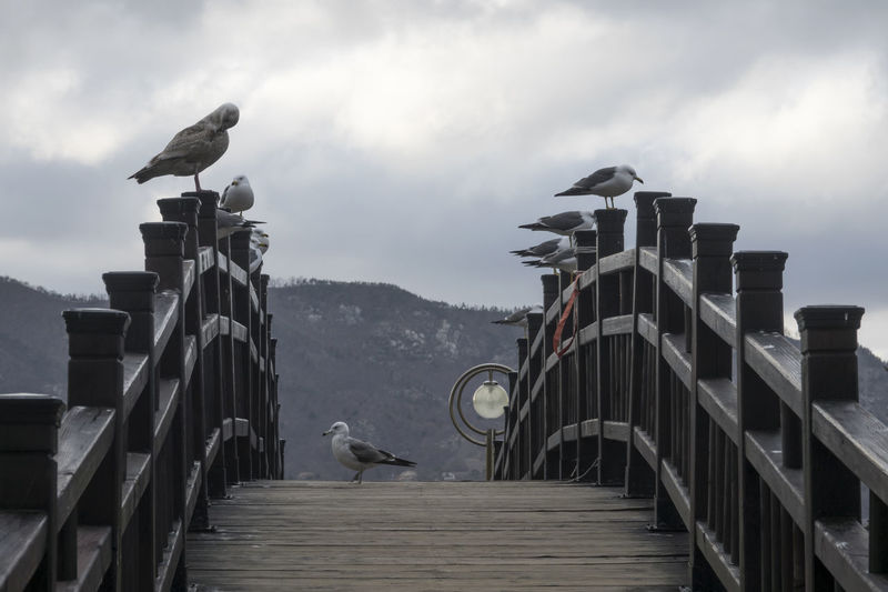 Birds perching on steps against sky