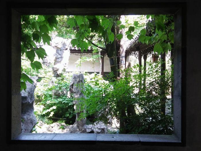 Window Green