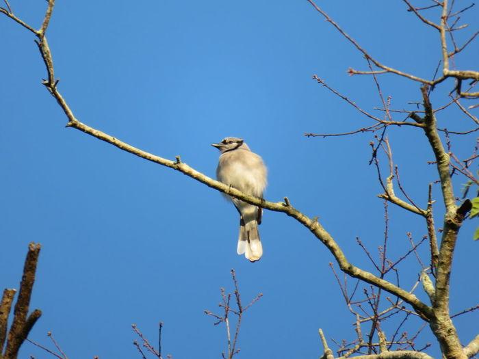 Bird on a branch Bird Perching Tree Branch Clear Sky Blue Tropical Bird Beak Animal Eye HEAD Feather