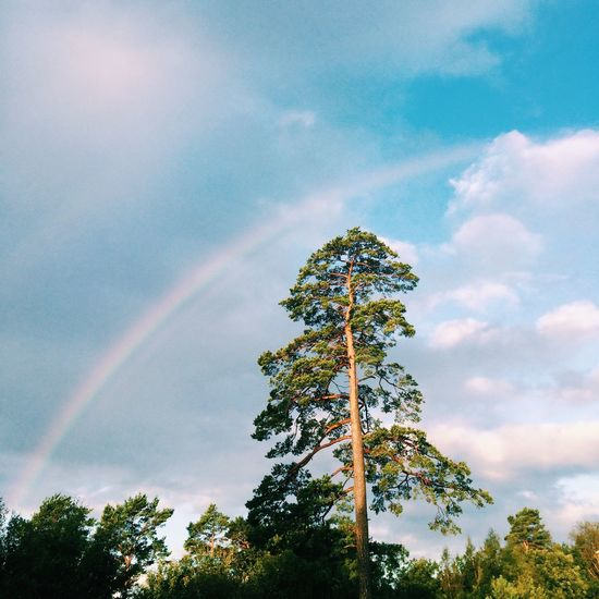 Low angle view of tree against rainbow in sky