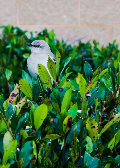 Bird Bird Photography Bird In A Bush Bird On A Bush Bush Green Bush Canon Powershot Powershot G9 Canon Powershot G9 Photoshopexpress