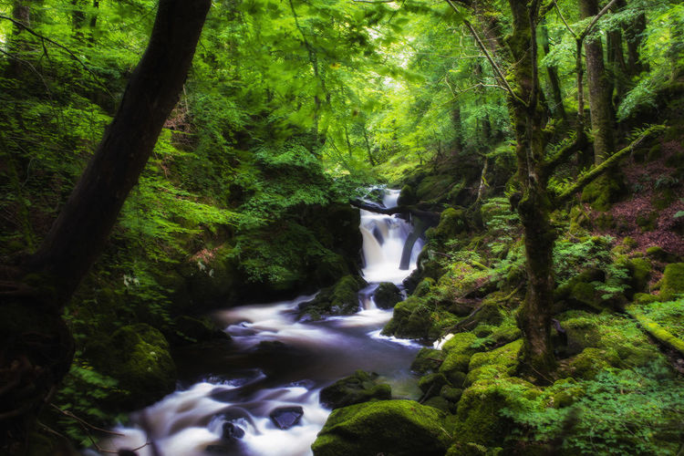 Dolgellau, Snowdonia Waterfall Torrent, Walk, Waterfall, Dolgellau, Snowdonia Beauty In Nature Blurred Motion Flowing Water Forest Growth Long Exposure Motion Nature No People Outdoors Scenics Tree Water Waterfall