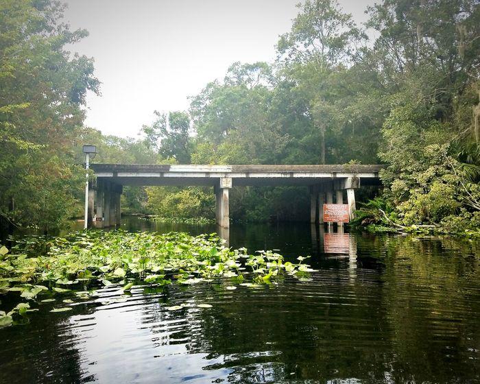 Waiting for my love down river. Wekiva River Wekiwasprings Florida Life Waterfront Nature Bridge - Man Made Structure Florida Beauty Florida Gators Riverfront
