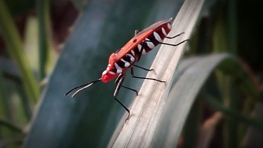 Bug Insectlovers FloraANDfauna Insect Photography Insects Collection Serangga Naturelovers Nature Photography Photooftheday