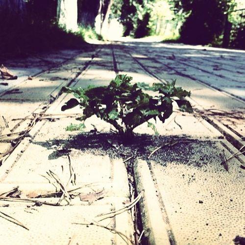 растение , плитка , тратуар