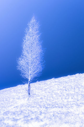 Frozen plant on snowy field against blue sky