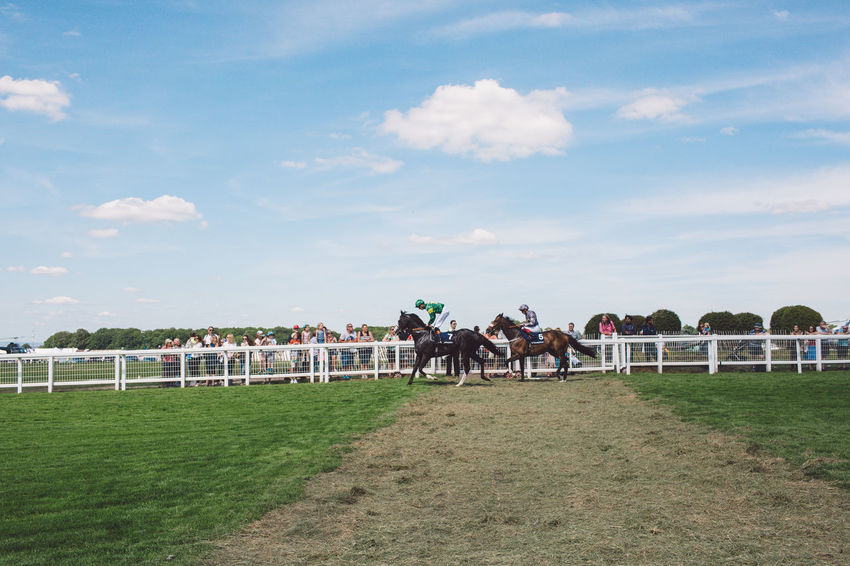 Beauty In Nature Cloud - Sky Competition Day Domestic Animals Epsom Downs Racecourse Grass Herbivorous Horse Horse Racing Horseback Riding Jockey Livestock Mammal Men Nature One Animal One Person Outdoors People Real People Riding Sky Tree