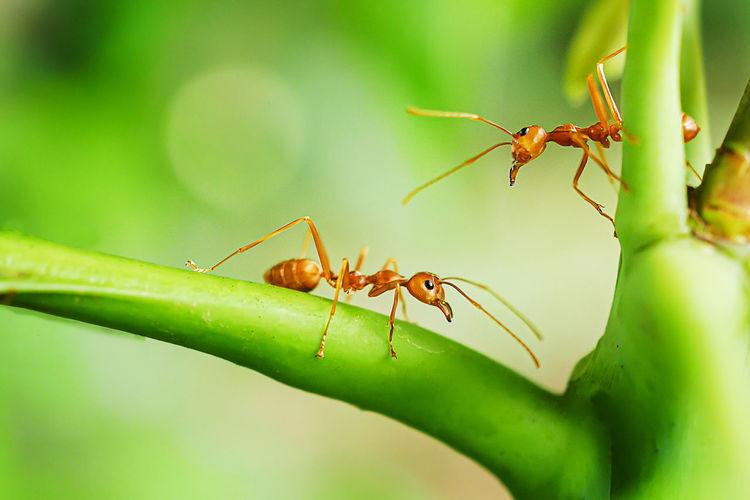 Animal Ant Ants