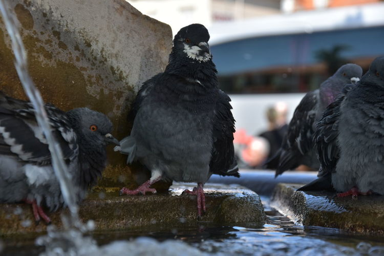 Close-up of birds perching on water