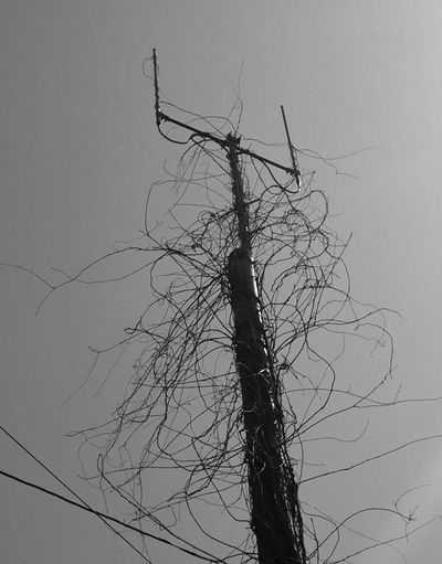 hairy pole B&w