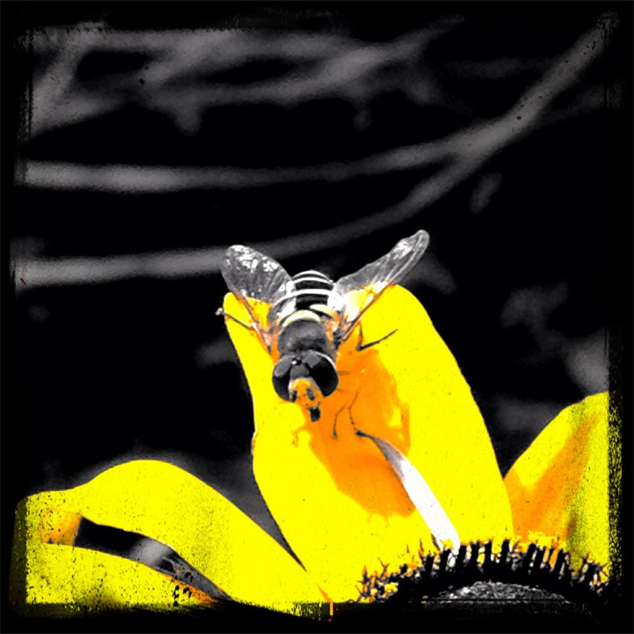 yellow, insect, one animal, animal themes, close-up, animals in the wild, no people, outdoors, day, nature