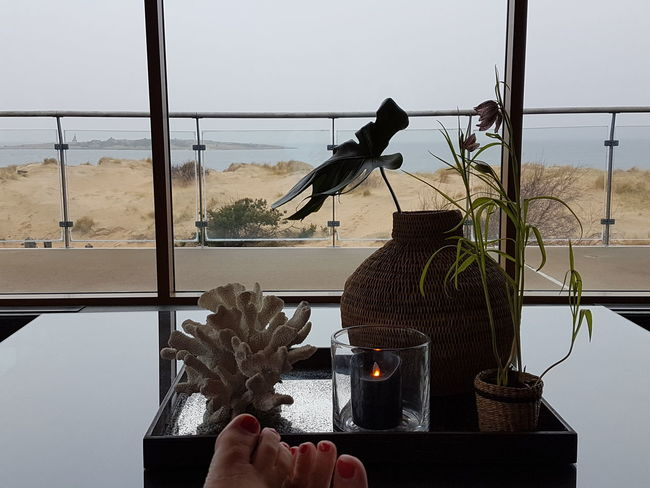 Spaday Ocean View Toes Window Plant Indoors  Water Nature