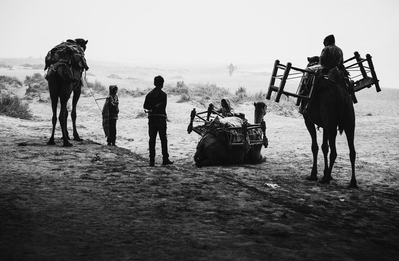 People with camels in the desert