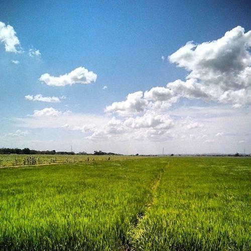 Arrozales Sky Clouds Green