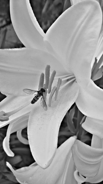 Lilia Garden Garden Photography