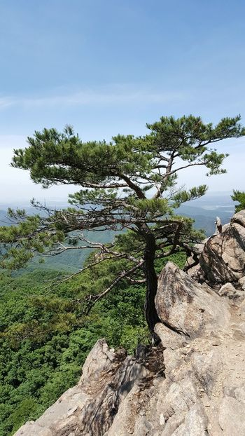 Tree Nature Landscape Day No People Outdoors Beauty In Nature Sky Top Of The Mountain Mountain Peak Scenics Beauty In Nature Mountain Plant Nature Tree