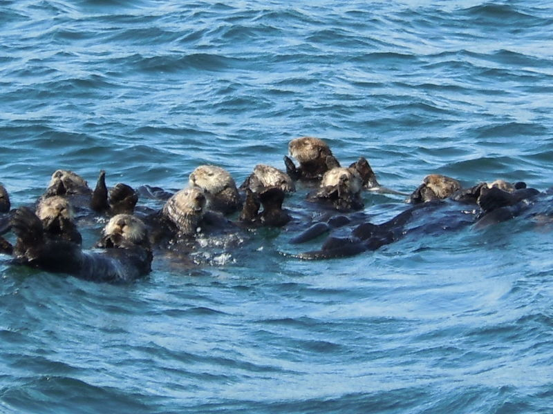 Alaska Otters Outdoors Vacations Wildlife Wildlife & Nature