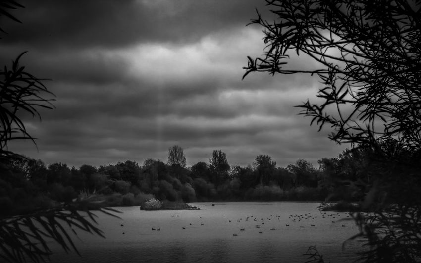 The Grey Day in The UK Landscape_Collection Beauty In Nature Black And White Blackandwhite Photography Cloud - Sky Day Growth Landscape_photography Nature No People Outdoors Plant Scenics Serene Serene Outdoors Sky Tranquil Scene Tranquility Tranquillity Tree Water