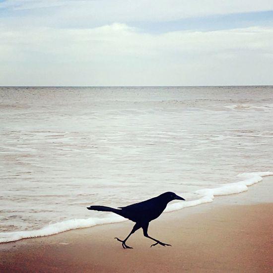 Sea Bird Crow Bird Tribe Spirit Spirit Animal Twilight Between Worlds Love Unconditional Love Sacred Law Darkness And Light Dark Totem Solitude Silence Beach Peace Nature_collection Naturelovers