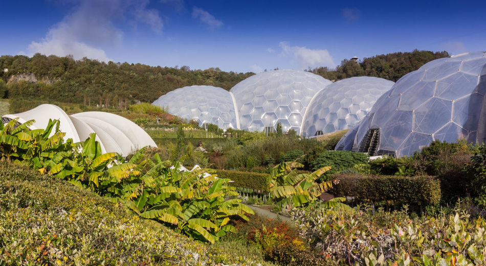 The Eden Project is a popular visitor attraction in Cornwall, England. Inside the two biomes are plants that are collected from many diverse climates and environments. The project is located in a reclaimed Kaolinite pit, located from the town of St Blazey St Blazey Two Biomes Cornwell Flowers,Plants & Garden The Eden Project The Tropical Biome Tourist Attraction  Tree Beauty In Nature Climates And Environments Day Diverse Culture England Field Growth Landscape Nature No People Outdoors Plant Sky Tourism Tree Yha