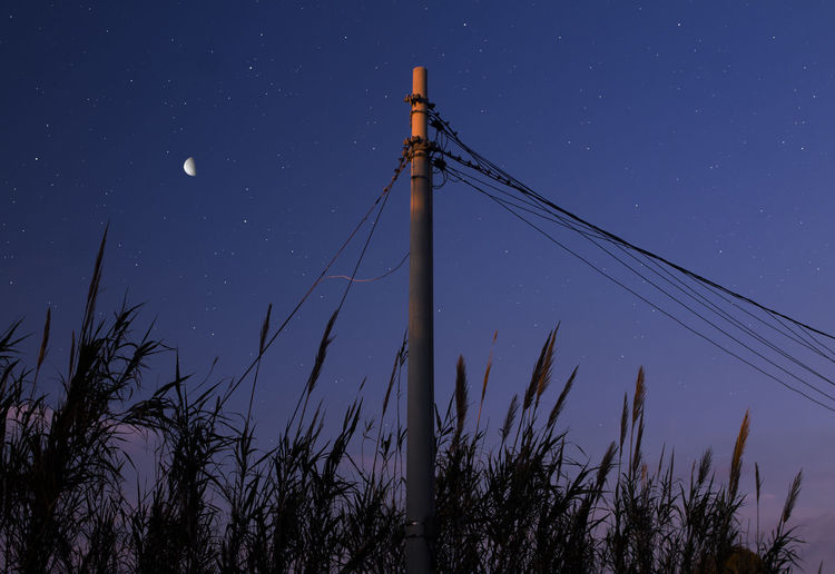 Sky Low Angle View Plant Nature Night No People Blue Star - Space Tall - High Tree Technology Space Outdoors Cable Clear Sky Scenics - Nature Tranquility Metal Connection Pole Astronomy Electricity  Power Supply Telephone Line